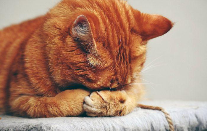 Nettoyer l'urine de chat sur un matelas