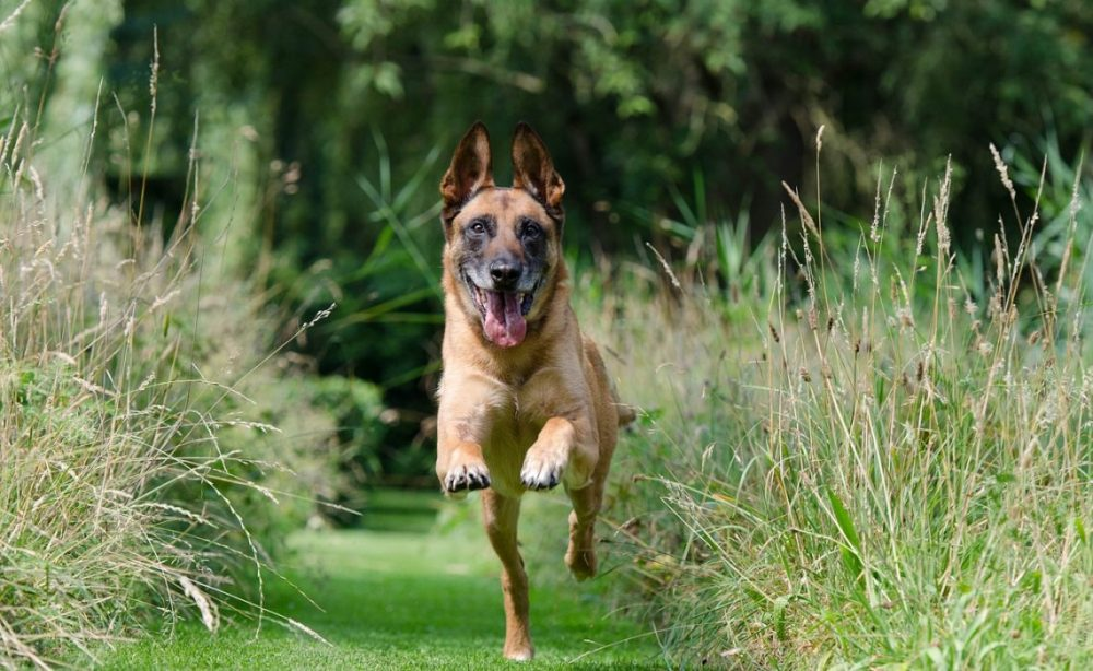 Comment installer un espace vert pour les animaux de compagnie ?