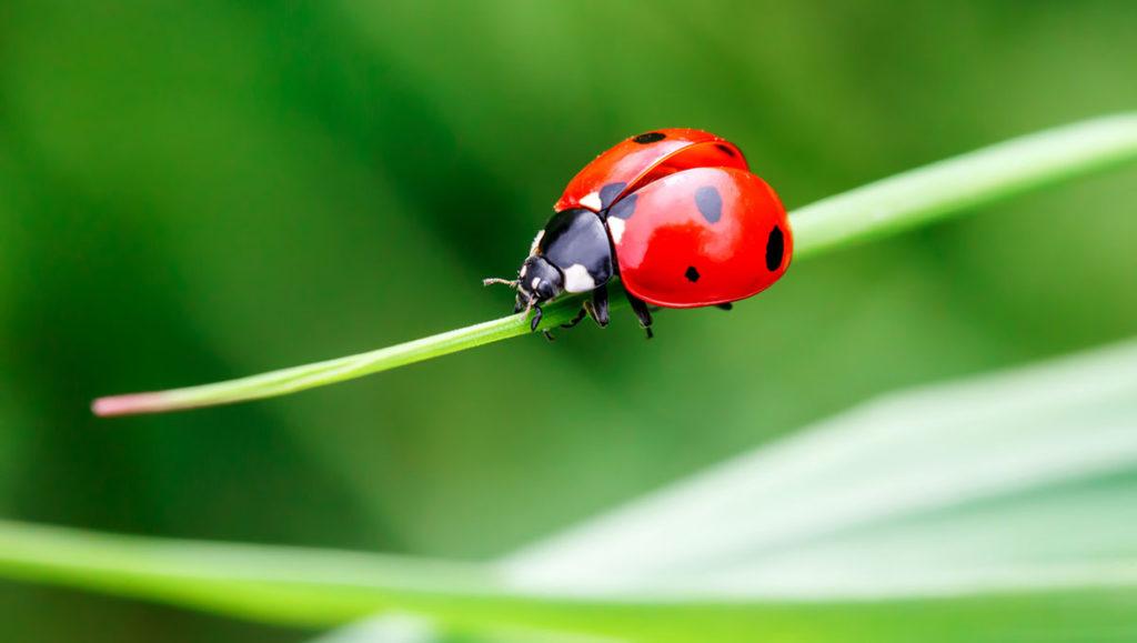 3 insectes qui nuisent aux plantes