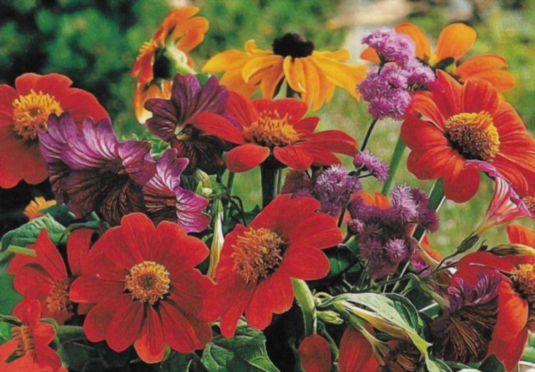 Jardin : composez vos bouquets colorés de l'été !