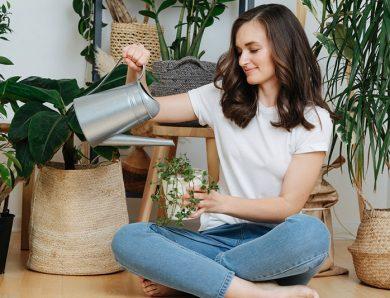 Les erreurs à éviter dans l'entretien des plantes d'intérieur