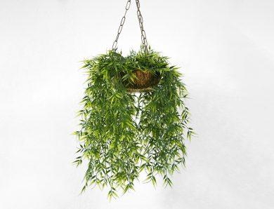 Comment choisir les plantes qui tombent en cascade ?